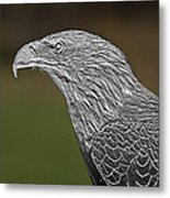 Proud Bald Eagle  Metal Print