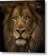 Proud Metal Print by Cheri McEachin