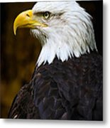 Proud Eagle Profile Metal Print by Athena Mckinzie