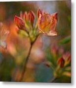 Proud Orange Blossoms Metal Print
