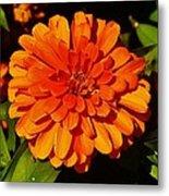 Proven Winners Flower Metal Print