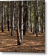 Provin Trails Park Forest Metal Print