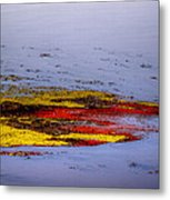 Psychedelic Algae  Metal Print by Thomas Young