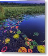 Psychedelic Shore - Great Meadows Nwr Metal Print by Sylvia J Zarco