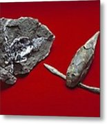 Pterichthyodes, Fish Fossil Metal Print