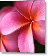 Pua Lei Aloha Cherished Blossom Pink Tropical Plumeria Hina Ma Lai Lena O Hawaii Metal Print