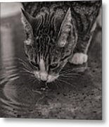 Puddle Drinking Kitty Metal Print