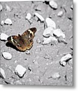 Puddling Butterfly 8766 Metal Print