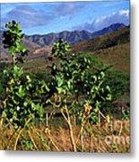 Puerto Rico Cayey Mountains Near Salinas Metal Print