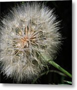 Puff And Your Gone Metal Print