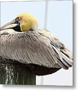 Puffed Up Metal Print by Paula Rountree Bischoff