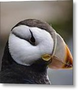 Puffin Head 3 Metal Print