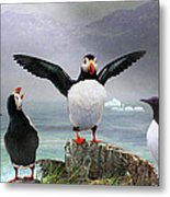 Puffin Pano Metal Print by R christopher Vest