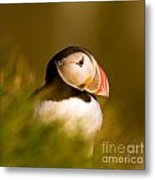 Puffin Portrait Metal Print