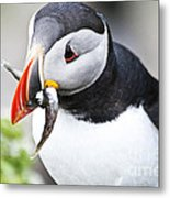 Puffin With Fish Metal Print