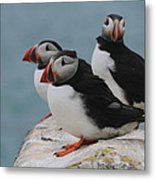 Puffins  Metal Print by Peter Skelton