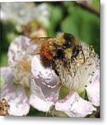 Puffy Bee Metal Print