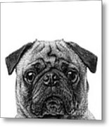 Pug Dog Square Format Metal Print
