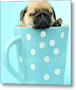 Pug In A Cup Metal Print