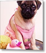 Pug Puppy Bath Time Metal Print