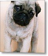 Pug Puppy Dog Metal Print