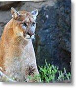 Puma On The Watch Metal Print