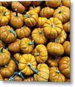 Pumpkin Galore. Metal Print