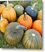 Pumpkin Harvest Metal Print