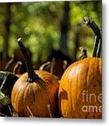 Pumpkin Line Up Metal Print