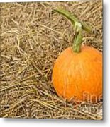 Pumpkin On The Straw  Metal Print