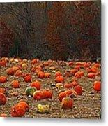 Pumpkin Season Metal Print