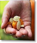 Pumpkin Seed Metal Print