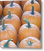 Pumpkins Galore Metal Print