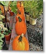 Pumpkins In A Row Metal Print