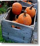 Pumpkins In Wooden Crates Metal Print