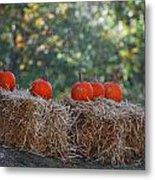 Pumpkins Metal Print by Lorena Mahoney