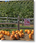 Pumpkins On The Farm Metal Print