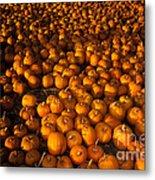 Pumpkins Metal Print by Ron Sanford
