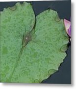 Puple Lily And Pad With Raindrops Metal Print
