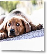 Puppet Dog Metal Print