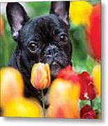 Puppie And Dog  Metal Print