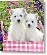Puppies In A Pink Basket Metal Print