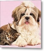 Puppy And Kitten Metal Print by Greg Cuddiford