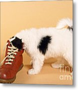 Puppy Dog With Head In Red Shoe Metal Print