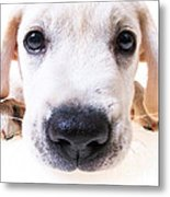 Puppy Face Metal Print by Diane Diederich
