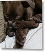 Puppy Feet Metal Print