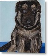 Puppy - German Shepherd Metal Print