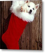 Puppy In Christmas Stocking Metal Print