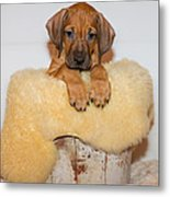 Puppy In The Bucket Metal Print