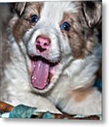 Puppy Laughter Metal Print